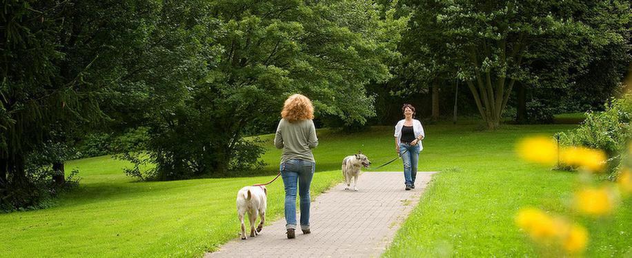 MEDIAN Klinik Freizeit und Umgebung Spaziergänger mit Hunden