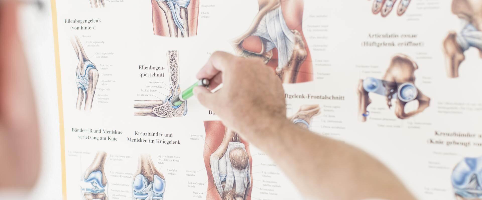Infoposter zu Muskeln im MEDIAN Reha-Zentrum Bernkastel-Küs Klinik Moselschleife