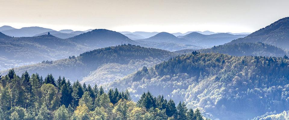 Wälder in der Nähe der MEDIAN Privatklinik Berggarten Deidesheim