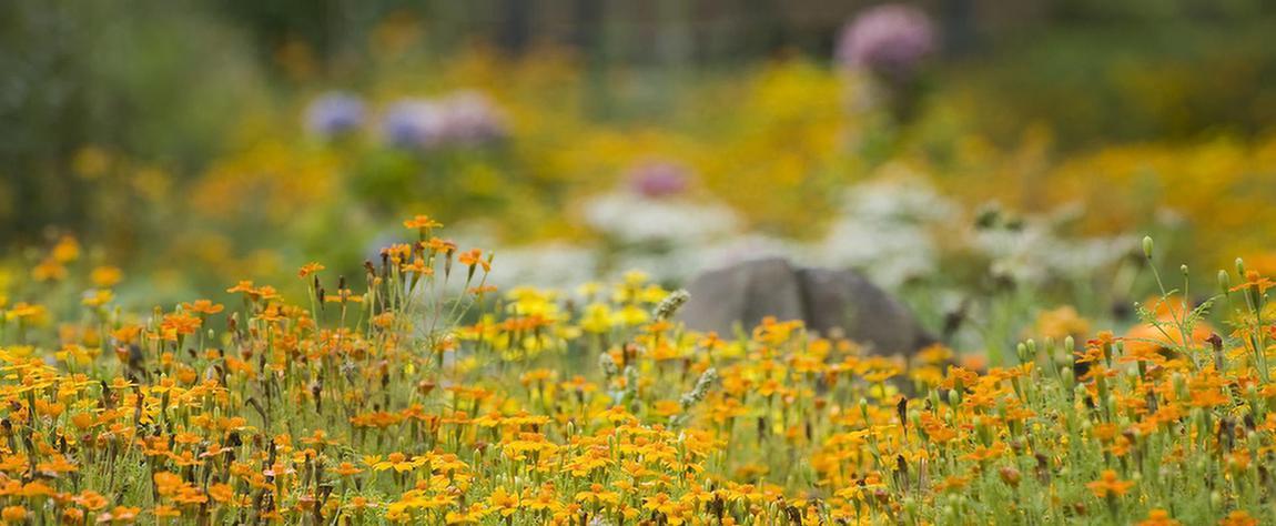 Blumenwiese in der MEDIAN Salze Klinik Bad Salzdetfurth